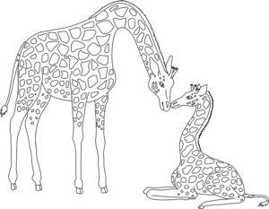 całe żyrafy 6.09